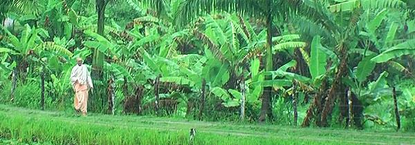 04-fazenda-nova-vrajadhama